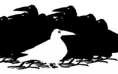 Hľadajú sa príbehy Bielych vrán