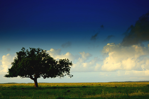 AktualityHlasovanie o Strom roka 2013 je odštartované