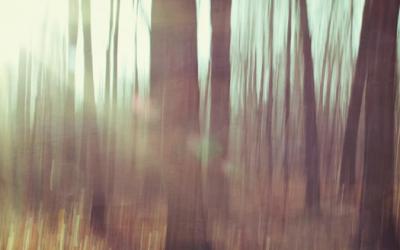 Do konca septembra môžete rozhodnúť o Strome roka 2013