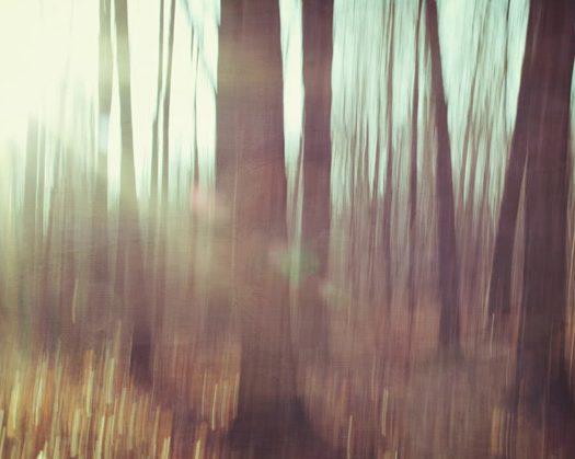 InformácieDo konca septembra môžete rozhodnúť o Strome roka 2013