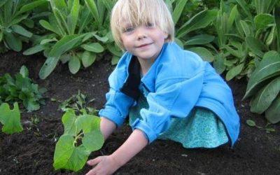 Živel – cena za environmentálnu výchovu
