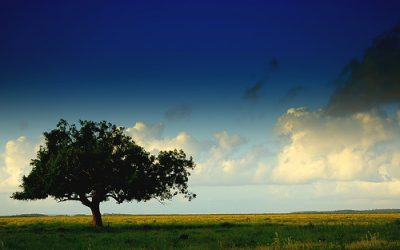 Hlasovanie o Strom roka 2013 je odštartované