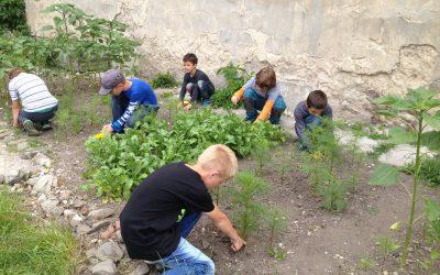 Poďte sa túlať so Živicou po záhradách, ktoré učia!